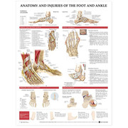 Anatomy and Injuries of the Foot and Ankle Chart.jpg