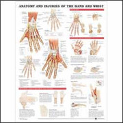 Anatomy and Injuries of the Hand and Wrist Anatomical Chart.jpg