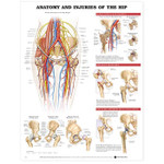 Anatomy and Injuries of the Hip Anatomical Chart.jpg