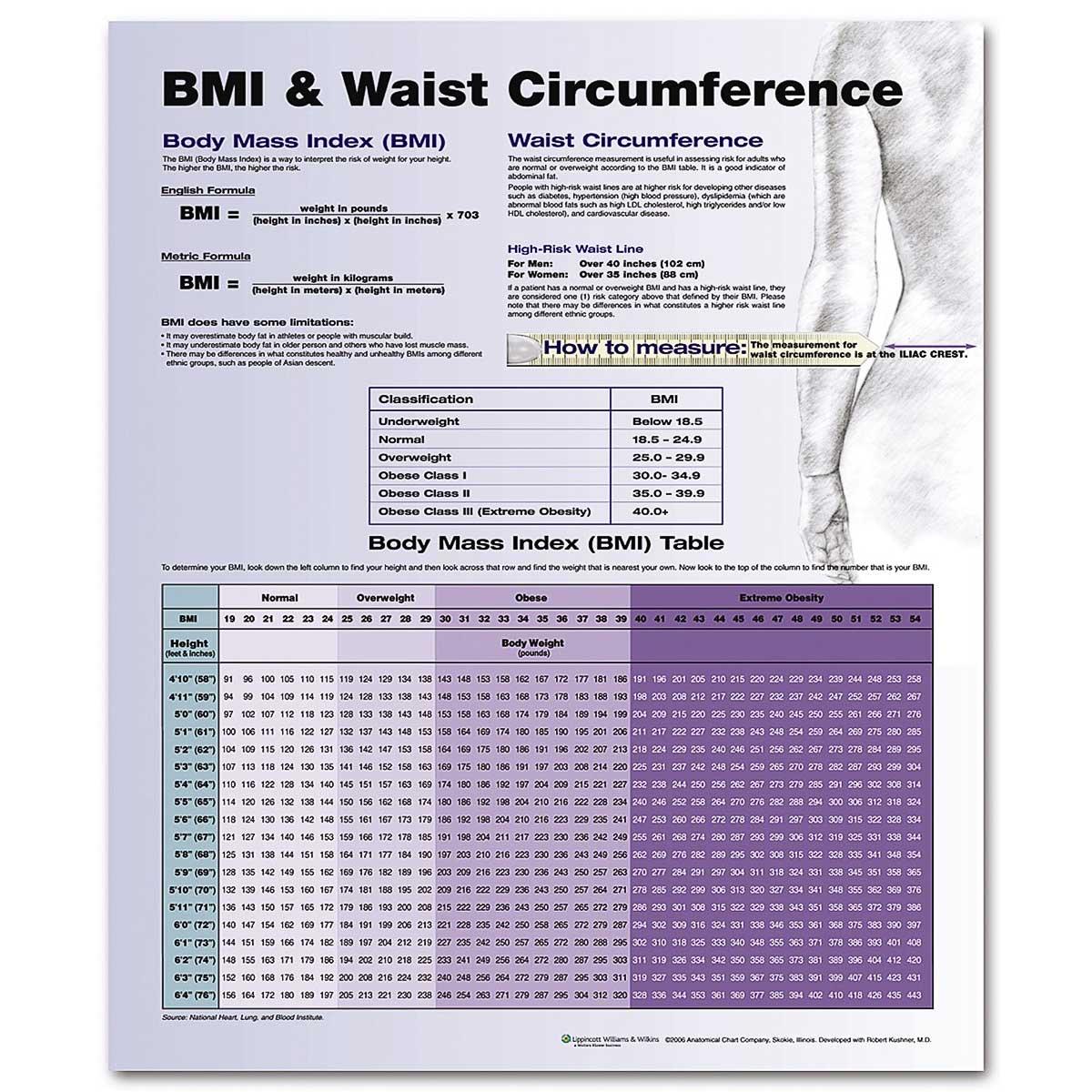Bmi Amp Waist Circumference Chart 20 X 26