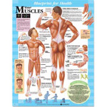 Blueprint for Health YOUR MUSCLES Chart.jpg