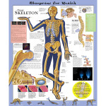 Blueprint for Health YOUR SKELETON Anatomical Chart.jpg