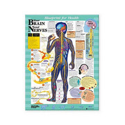 Blueprint for Health Your Brain and Nerves Chart.jpg