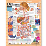 Blueprint for Health Your Digestive System Chart.jpg