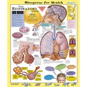 Blueprint for Health Your Respiratory System Chart.jpg