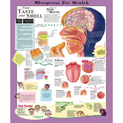 Blueprint for Health Your Taste and Smell Chart.jpg