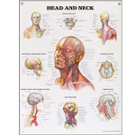Head and Neck Anatomical Chart.jpg
