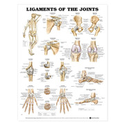 Ligaments of the Joints Anatomical Chart.jpg