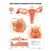 The Female Reproductive System Anatomical Chart.jpg
