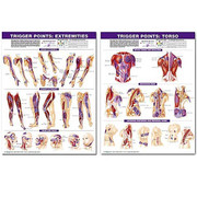 Trigger-Points-Chart-Set-NEW-0-LARGE.jpg