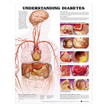 Understanding Diabetes Anatomical Chart.jpg